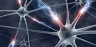 Activity in Dendrites Critical to Memory Formation
