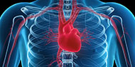 $15 Million Grant to Aid Cardiovascular Health