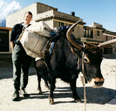 Wood delivers books by any means available, here with a yak-load on the Annapurna Circuit in Nepal in 2001.